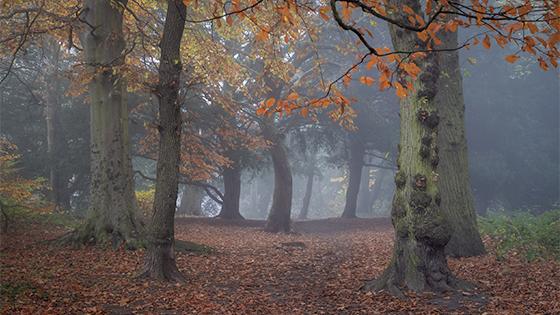 Landscape Photograph by Robert Bishop
