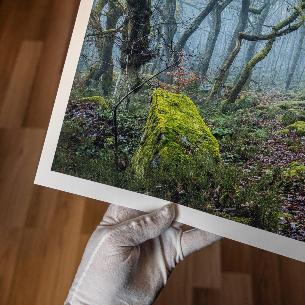 Robert Bishop - Enchanted Path Print