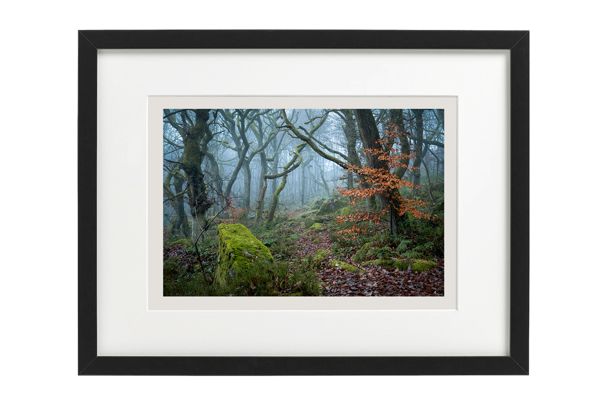 Enchanted Path framed by Robert Bishop